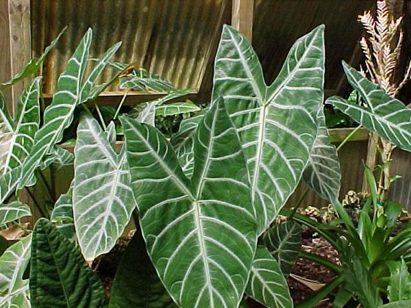 Plantas de interior exóticas 2