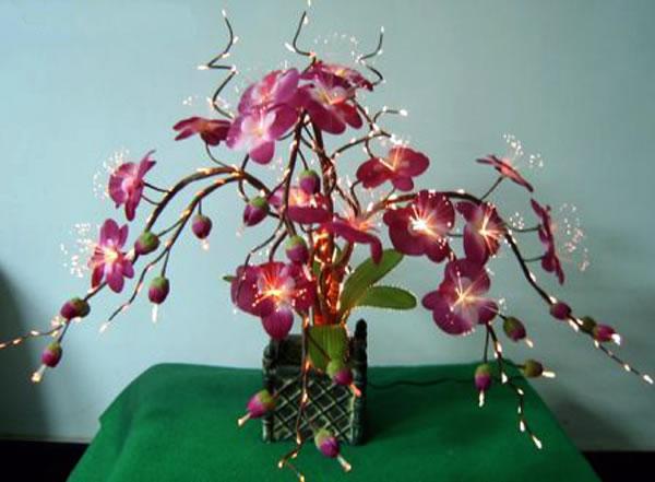 Plantas de interior exóticas 3