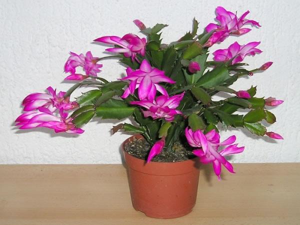 Plantas de interior exóticas 4