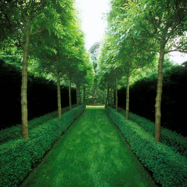 Simetría en el jardín 6