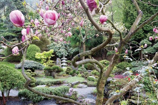 Un jard n japon s for Plantas jardin japones