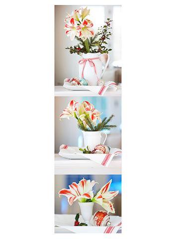 Cultivo y cuidado de amaryllis 2