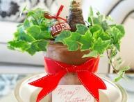 imagen Cultivo y cuidado de amaryllis, la nueva flor de la Navidad