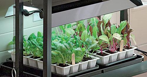 Cultivo con luz artificial 1