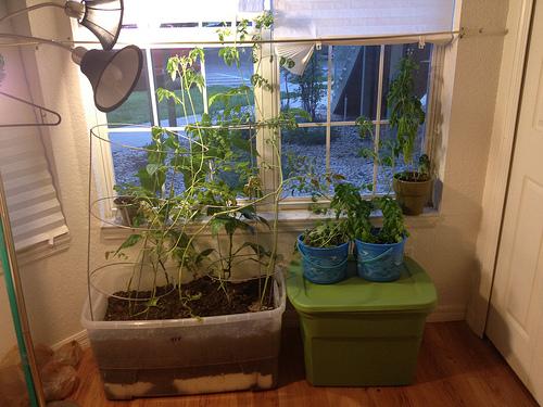 Cultivo con luz artificial 3