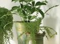 imagen Lavar las plantas de interior para prevenir las plagas