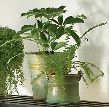 Lavar las plantas de interior para prevenir las plagas for Abono para plantas de interior