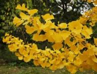 imagen Los cinco árboles más resistentes al viento