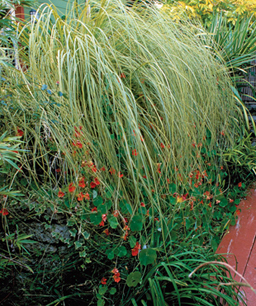 Nueve inusuales hierbas ornamentales 1