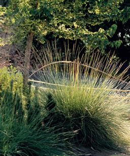 Nueve inusuales hierbas ornamentales 3