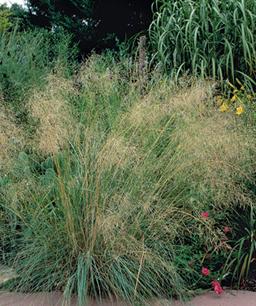 Nueve inusuales hierbas ornamentales 5