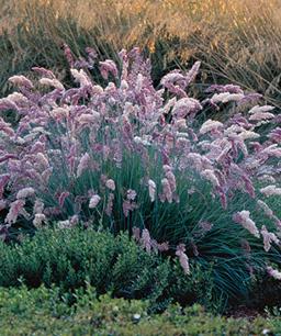 Nueve inusuales hierbas ornamentales 7