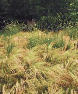 Nueve inusuales hierbas ornamentales 8