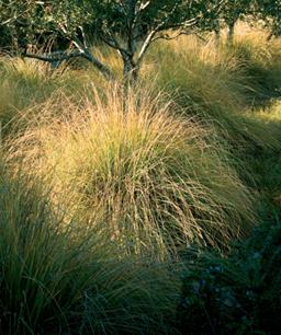 Nueve inusuales hierbas ornamentales 9