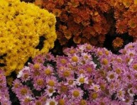 imagen Plantas para purificar el aire de nuestra casa