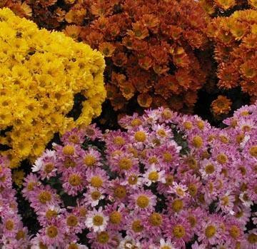 Plantas purificadoras del aire 4
