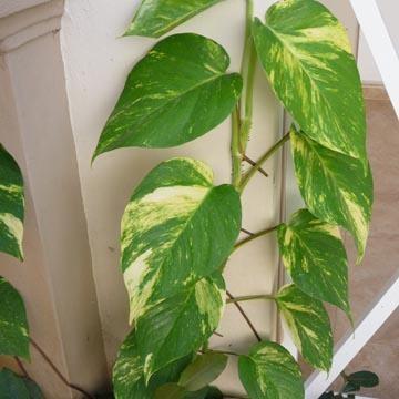 plantas del aire