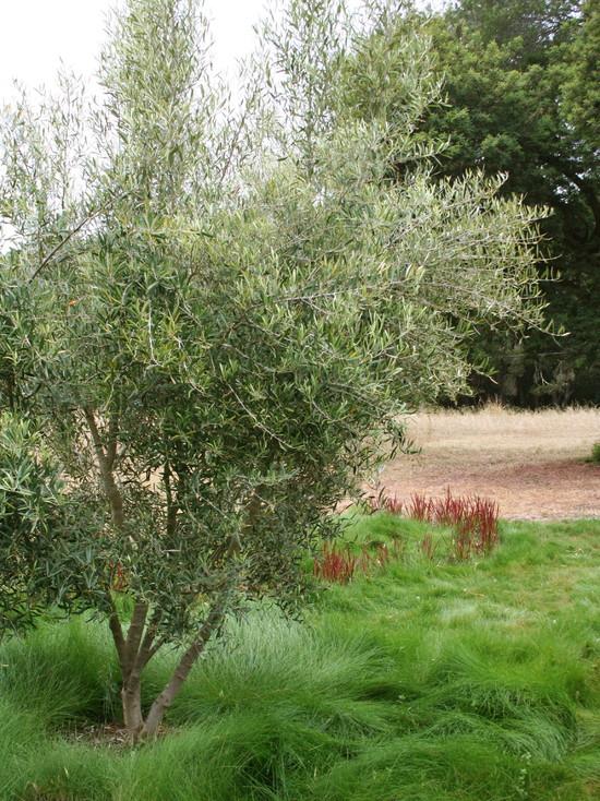 Un jardín mediterráneo en California 8