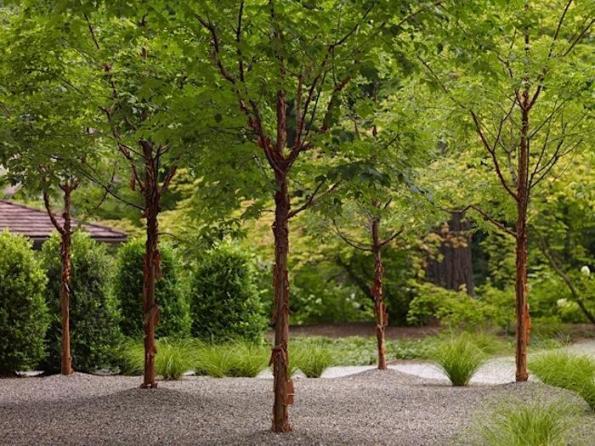 Jardín privado 1