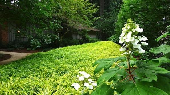 Jardín privado 4