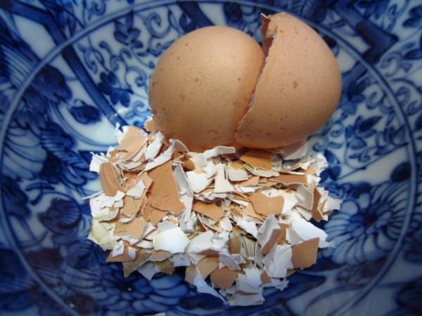 Usos de la cáscara de huevo en jardinería