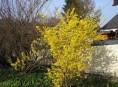 imagen Arbustos de floración invernal