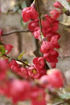 Arbustos de floración invernal2