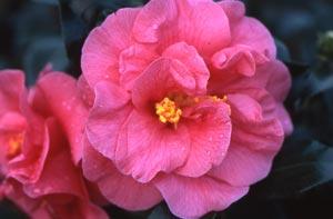 Arbustos de floración invernal3
