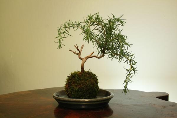 El arte del kokedama jardineria guia de jardineria - Guia de jardineria ...