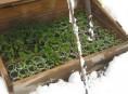 imagen Cómo proteger sus plantas del frío