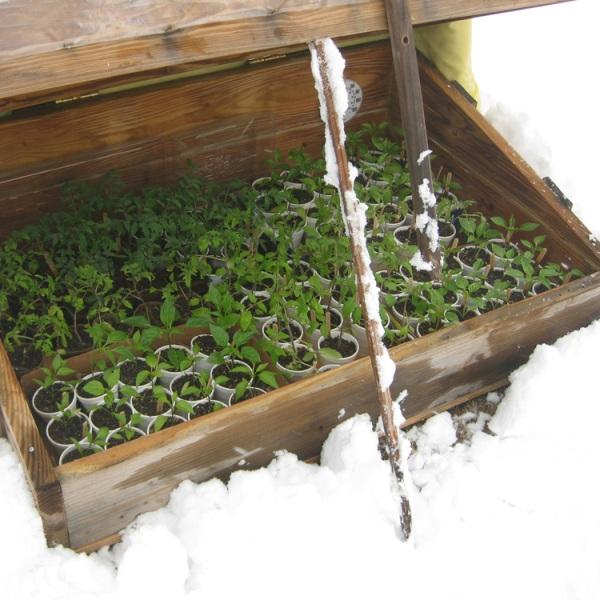Protege las plantas del frío 1