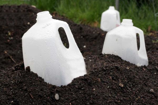 Protege las plantas del frío 4