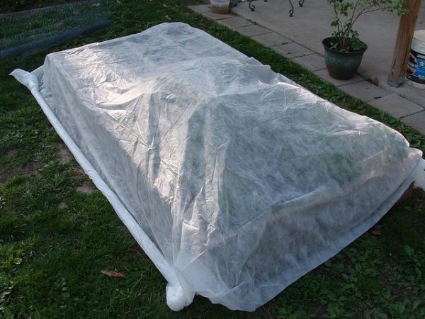 Protege las plantas del frío 5