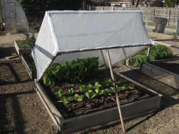 Protege las plantas del frío 6