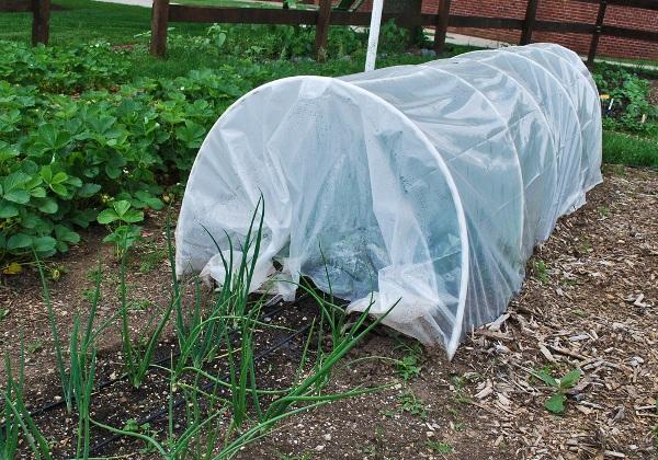 Protege las plantas del frío 7