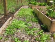 imagen Eliminar las malas hierbas con vinagre