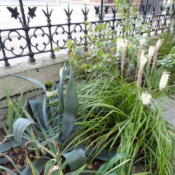 Garden Museum de Londres 6