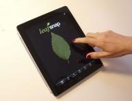 imagen Nueva herramienta para identificar plantas