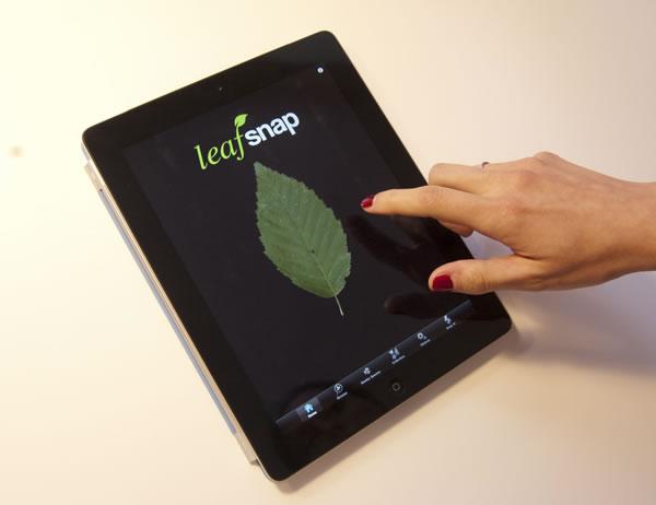 Nueva herramienta para identificar plantas1