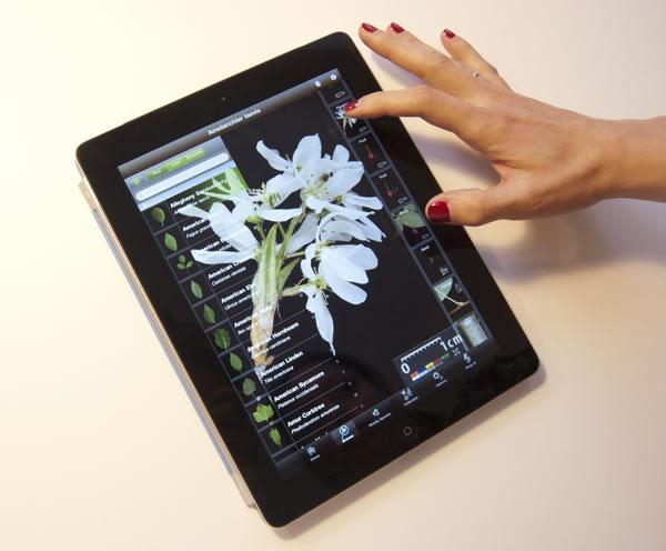 Nueva herramienta para identificar plantas2