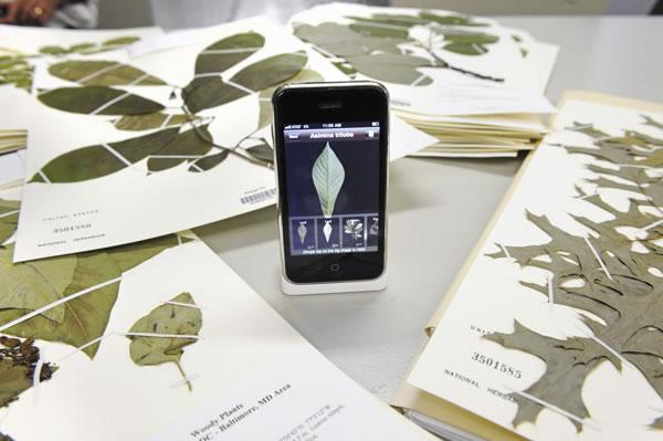 Nueva herramienta para identificar plantas5