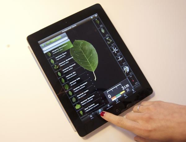 Nueva herramienta para identificar plantas6
