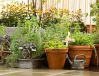 imagen Jardinería de azotea