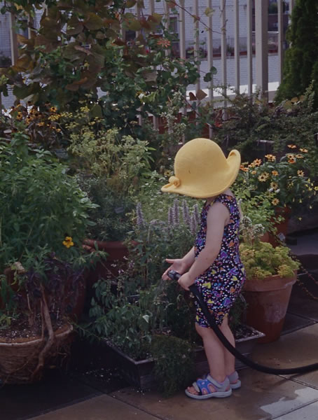 Jardines en la azotea 4