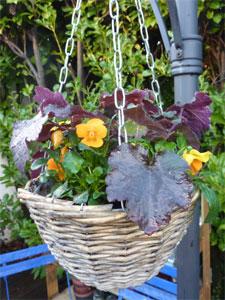 Jardinerias de invierno 2