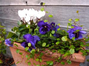 Jardinerias de invierno 3