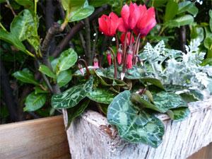 Jardinerias de invierno 4