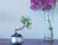 imagen Cómo montar un keshiki bonsai