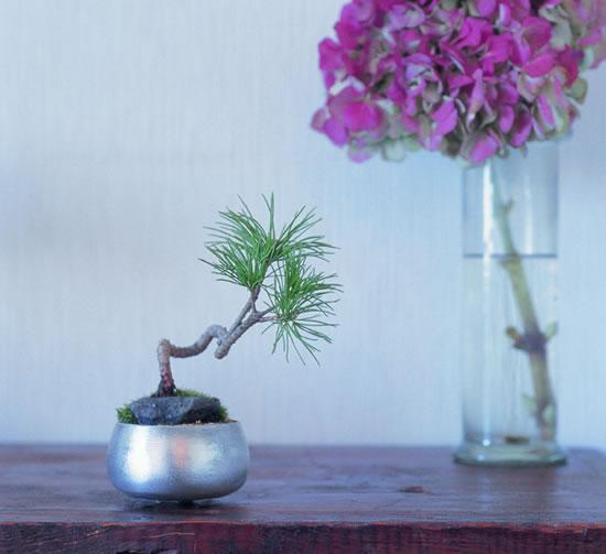 Cómo montar un keshiki bonsai1