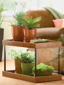 transplante de plantas de interior